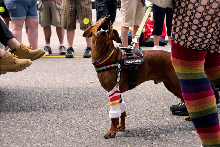 Ferous particularly enjoyed it. He really does seem to love parades! (Shot by Dreamer Brenna)